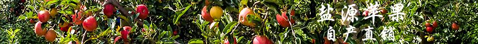 盐源苹果,欢迎助农支农,收获阳光自然果的您!
