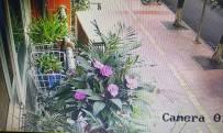 前天晚上买的花,没浇水,就焉了……今天早上浇水了