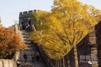 """""""人间天堂""""是什么模样?看看北京的秋天你就知道了"""