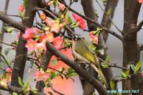 春光明媚花鸟图