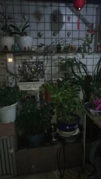 2020年1月11日晚上家中阳台上的花草